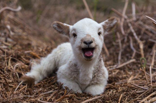 Lamb Child.jpg